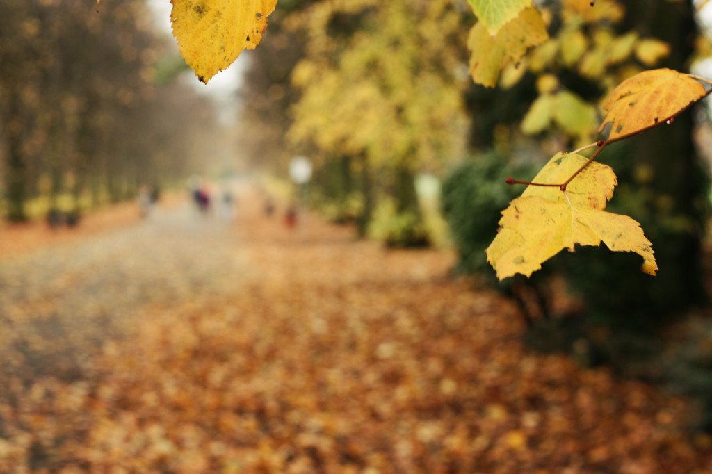 leaves-haslam-park