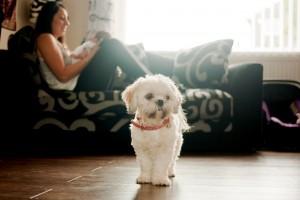 Very cute fluffy dog