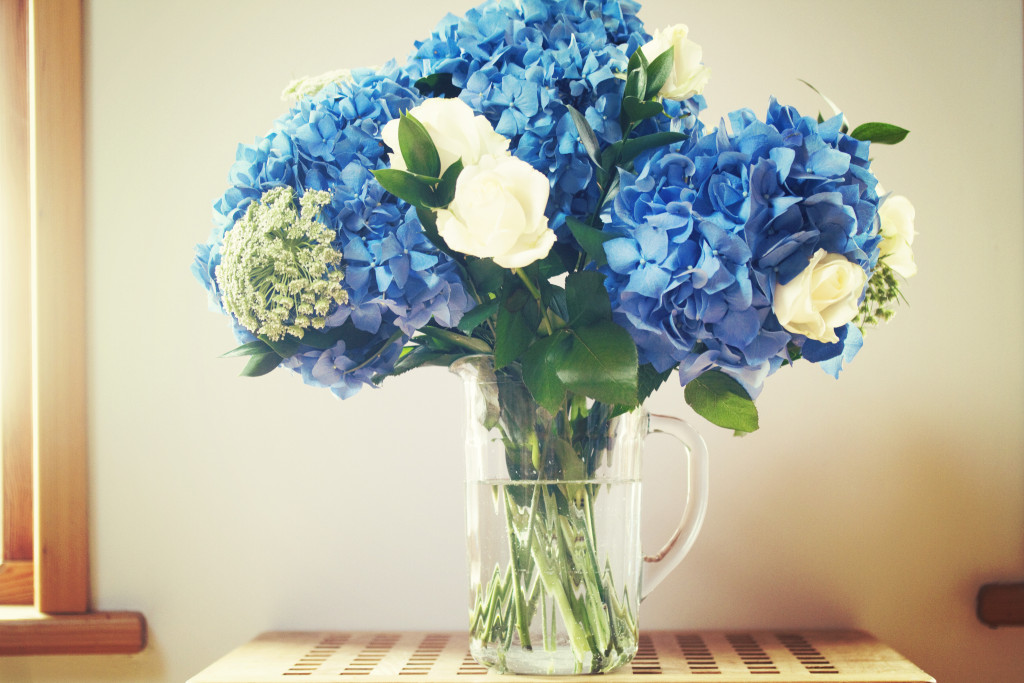 blue-hydrangeas