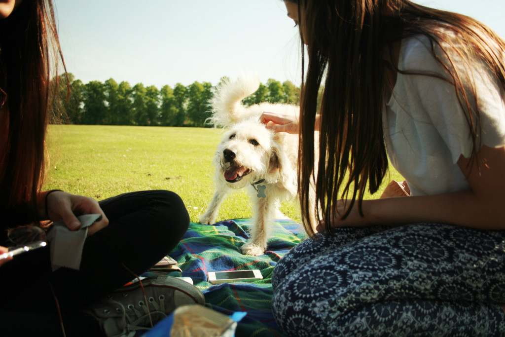 dog-visitor