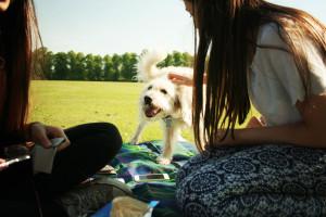 Cute white fluffy dog crashing park picnic