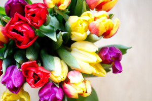 Mixed bouquet of tulips from above