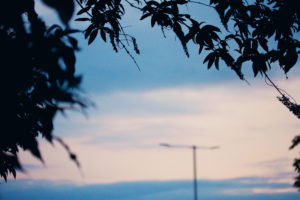Silhoetted leaves against sky at dusk
