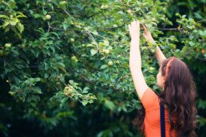 Teen girl picking apples off tree