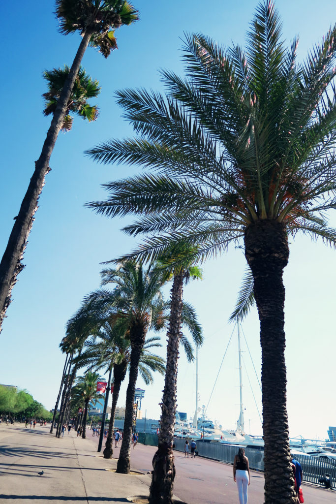 palm-trees-barceloneta-beach