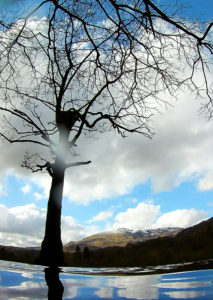 Leafless tree against blue sky with white fluffy clouds