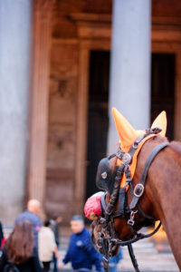 Horse wearing blinkers in Rome Italy.