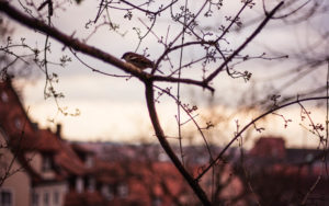 Bird sitting on branch in tree in Nuremberg